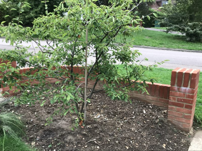 Planted November 2018