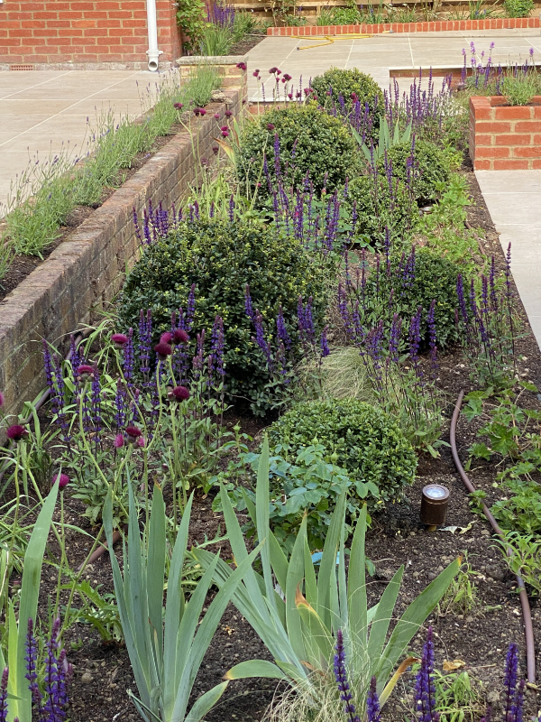 Large Family Garden, Harpenden | Jacqueline Poll
