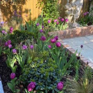 Sloping-garden-fe